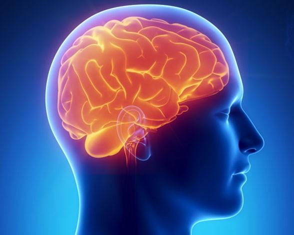 cerebro-cerebro-8444